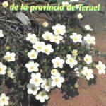 Catalogo floristico de la provincia de teruel