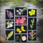 Guía de la flora vascular de la Cuenca del Guadalquivir